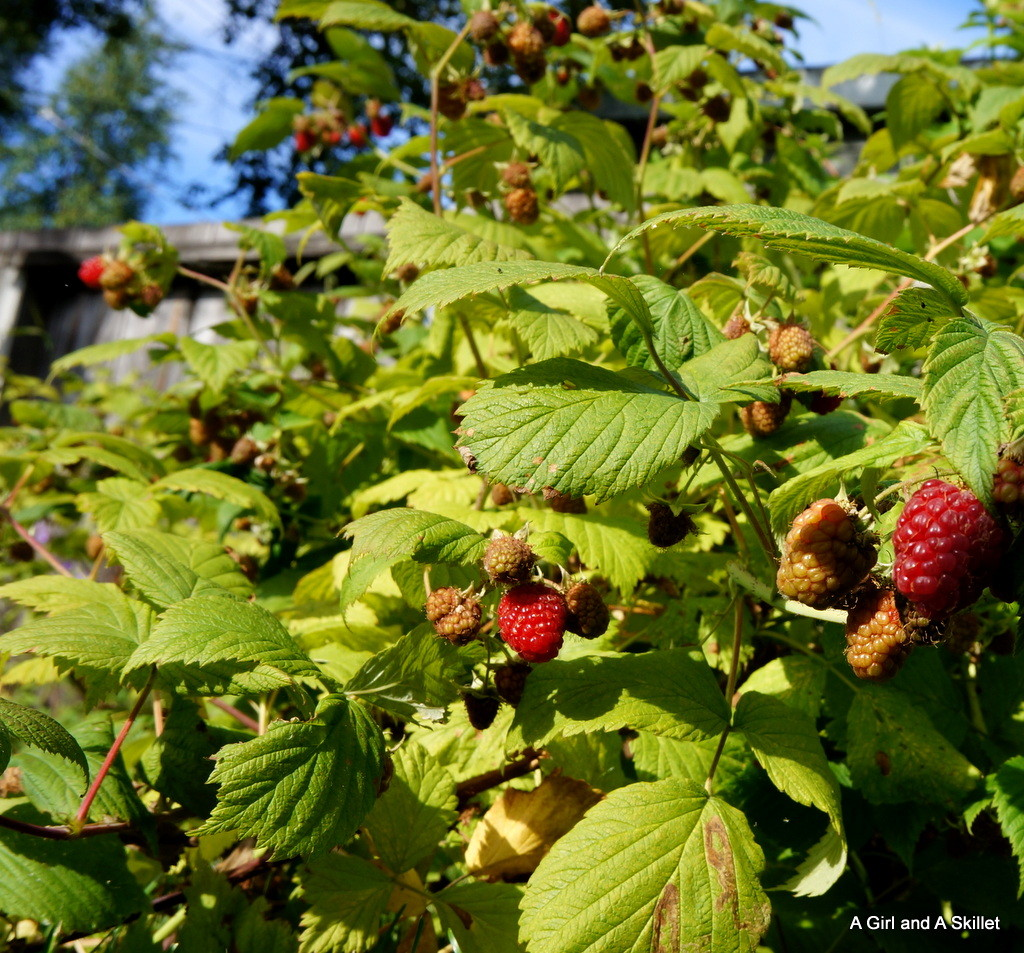 Alaska Grown Raspberries